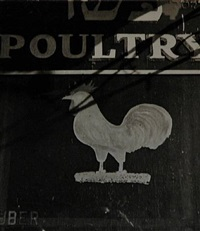 poultry shop sign [kosher rooster] by godfrey frankel